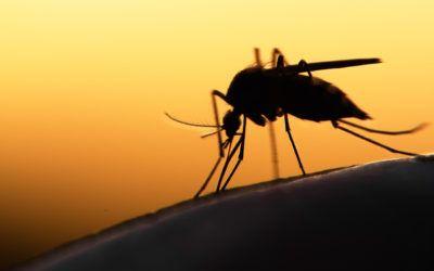Γνώριζες ότι τα κουνούπια τρέφονται με σάκχαρα που προέρχονται από φυτικούς χυμούς;
